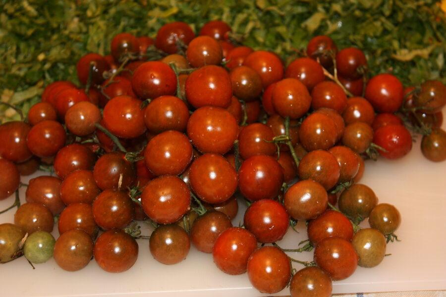 Brūnās odziņas (tomātus sēklas, 20 gab.)