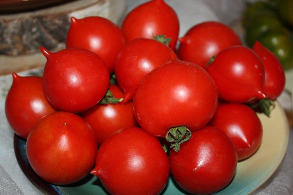 Resnie putni (tomātu sēklas, 20 gab.)