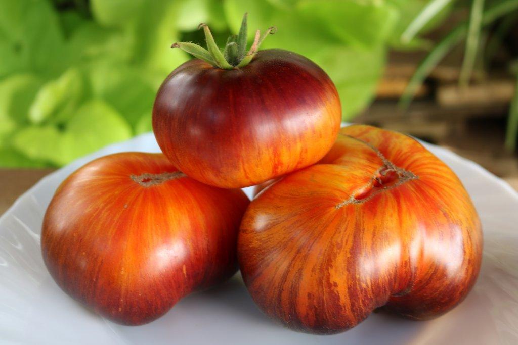 Alises sapnis (tomātus sēklas, 15 gab.)