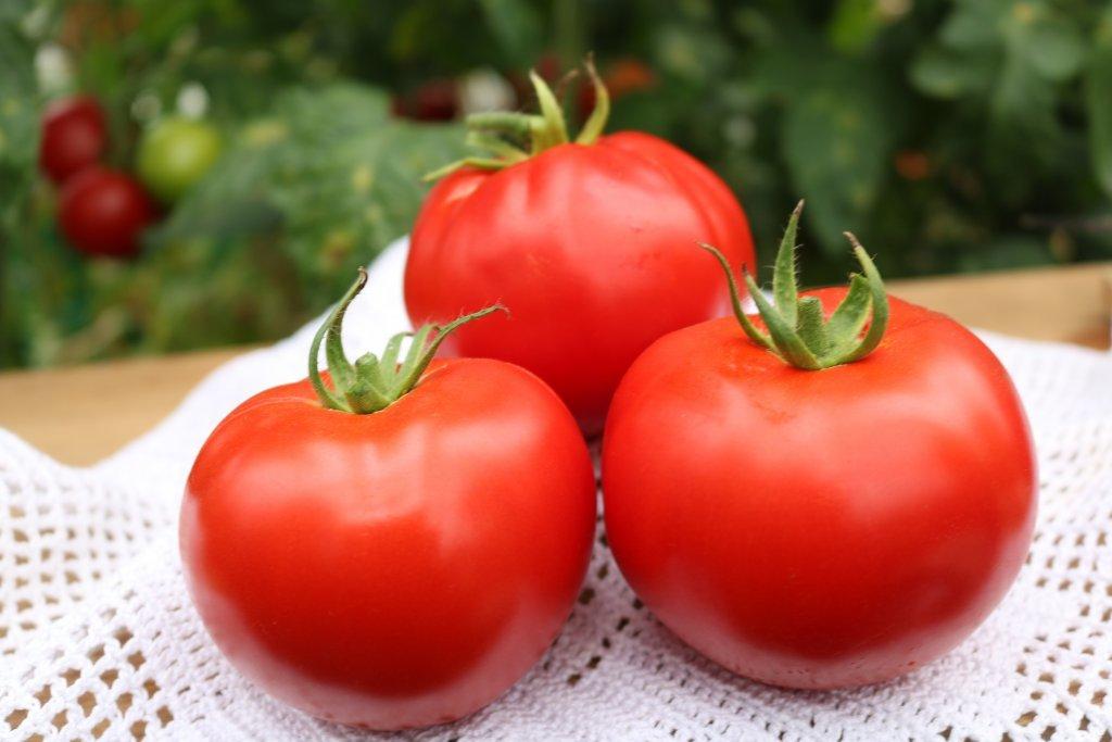 Mēness zaglis (tomātus sēklas, 20 gab.)