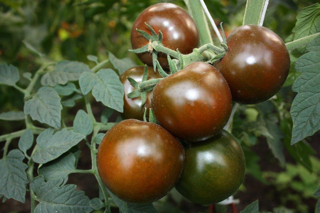 Vīru spēks (tomātu sēklas, 15 gab.)