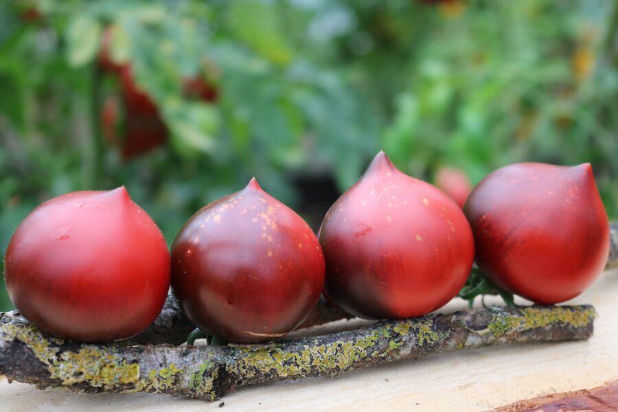 Sārtie putni (tomātus sēklas, 15 gab.)