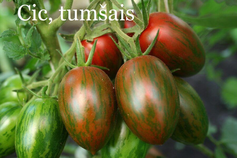 Cic, tumšais (tomātu sēklas, 15 gab.)