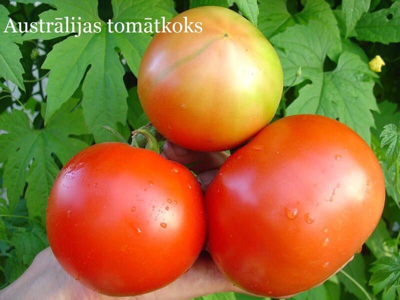 Lielaugļu tomāti, sarkani