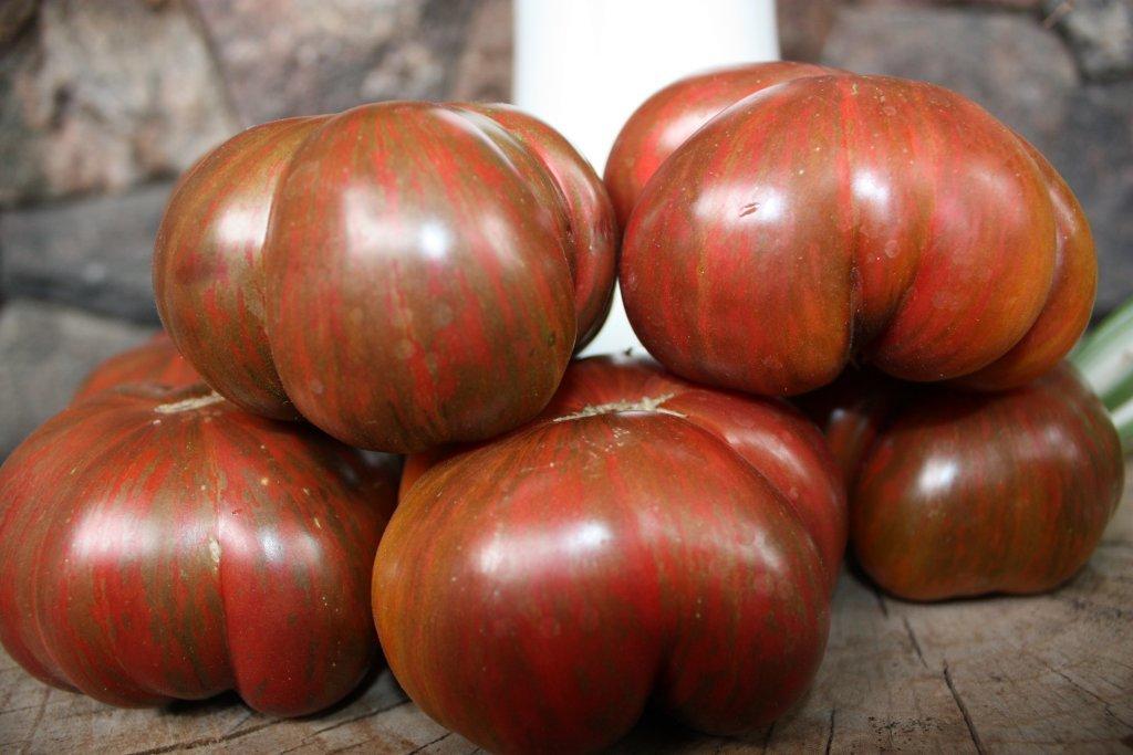 Azoru sārtums (tomātu stāds bez podiņa)