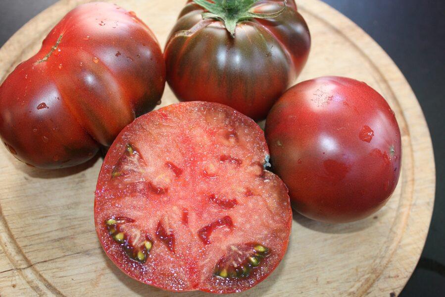 Jūras valdnieks (tomātu stāds bez podiņa)
