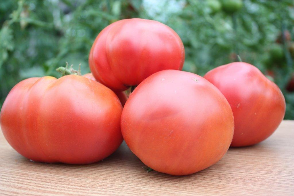 Korņējeva (tomātu sēklas, 20 gab.)