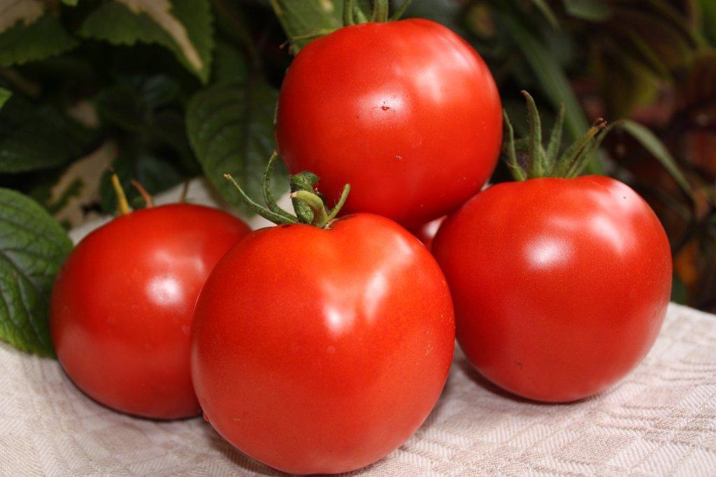 Latvijas Delikatese (tomātu stāds podiņā)