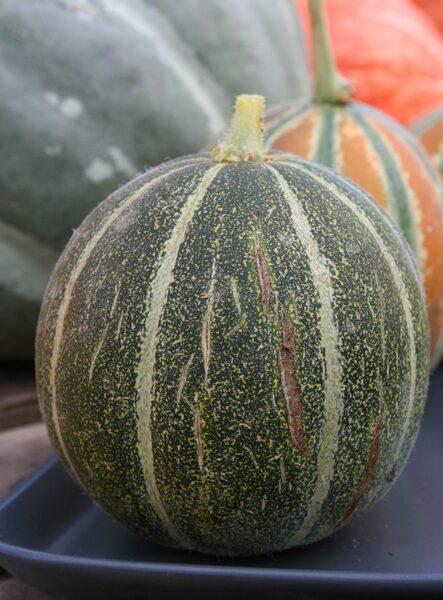 Melone 'Saldais pūderis'