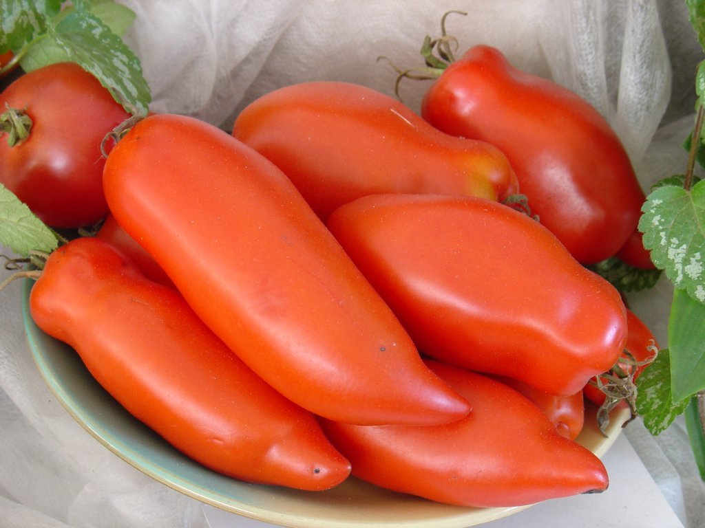 Piparveida sarkanie (stāds bez podiņa)