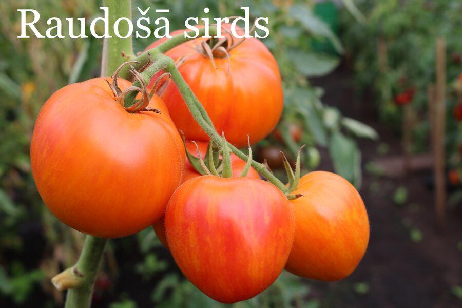 Raudošā sirds (tomātu sēklas, 15 gab.)
