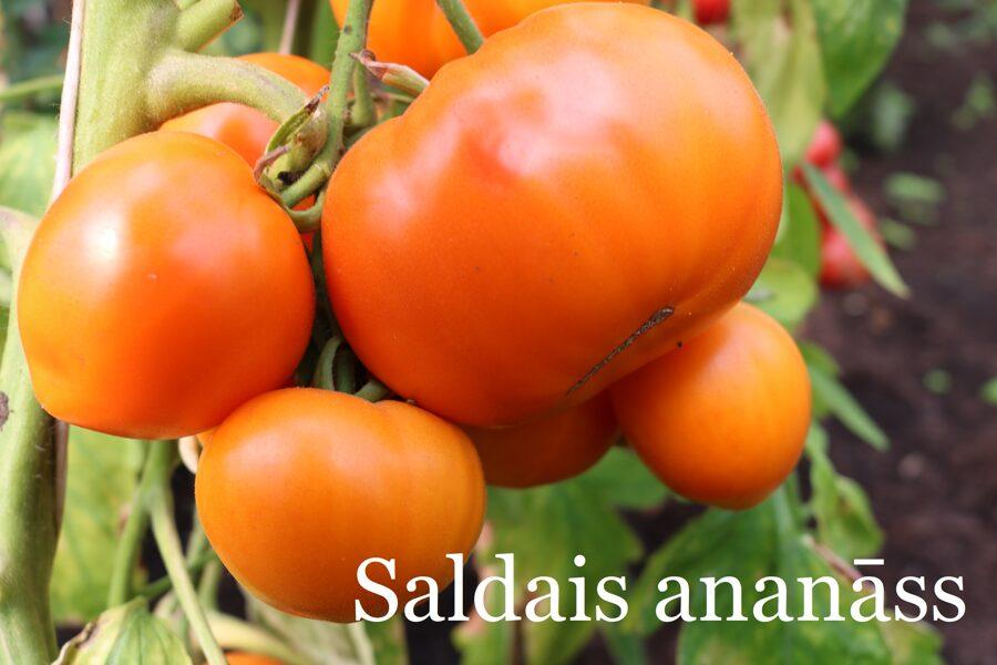 Saldais ananāss (stāds bez podiņa)