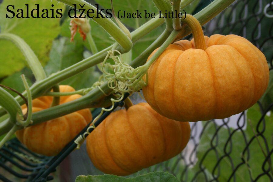 Saldais džeks (Jack be little) (ķirbju sēklas, 5 gab.)