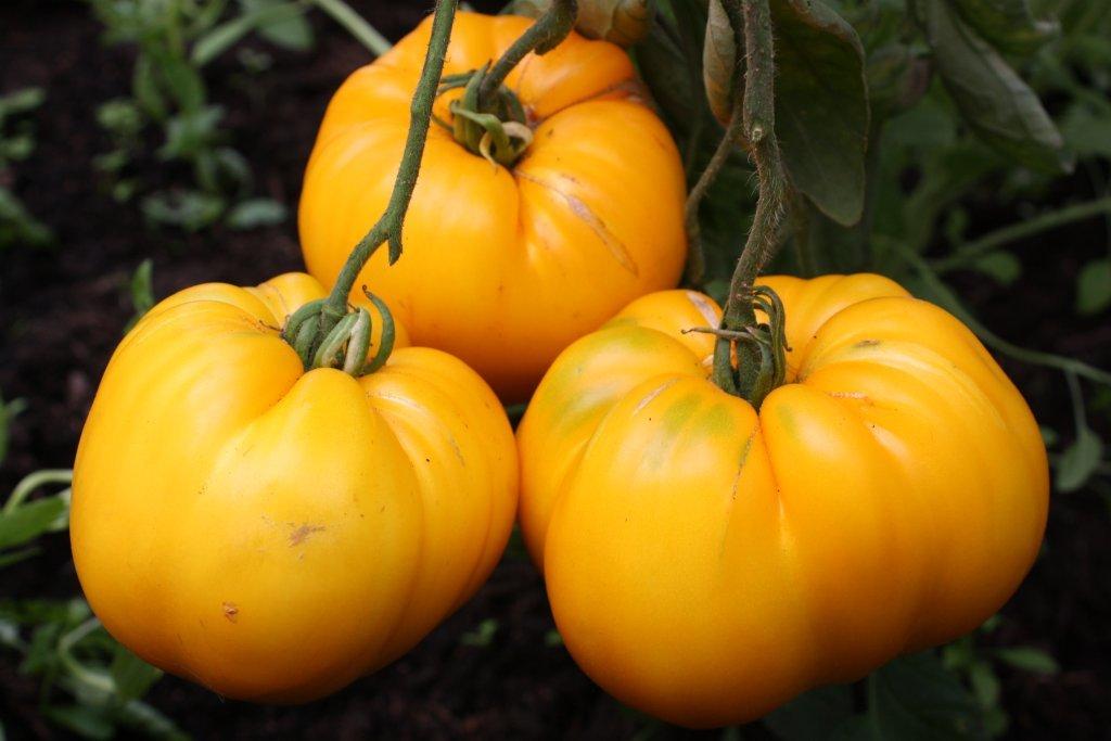 Oranžas un dzeltenas krāsas augļiem