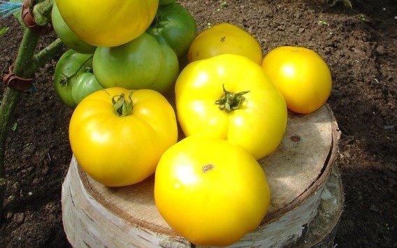 Zelta tomāts (tomātu sēklas, 20 gab.)