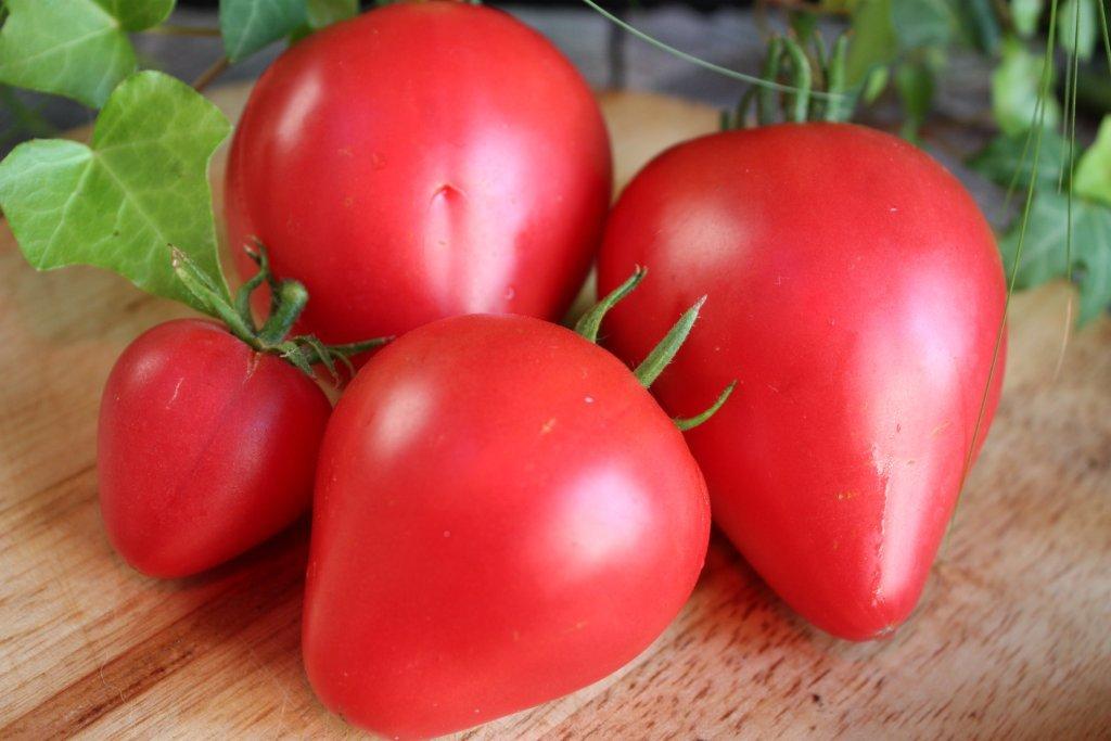 Zemeņu tomāts (stāds podiņā)
